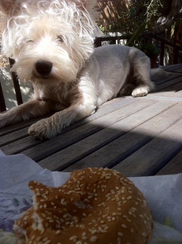 Someone trying to eat my burger