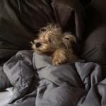 Daytime dog napping